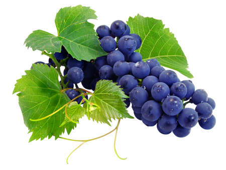 Fresh grape cluster with green leafs isolated