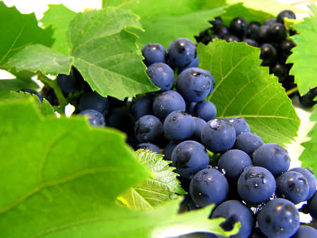 Fresh grape cluster with green leafs close-up Stock Photo - 1631487