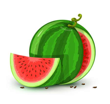 lobule: vector illustration of water melon fruit isolated on white background Stock Photo
