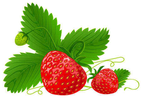 red strawberry fruits with green leafs vector illustration isolated on white background Stock Illustratie