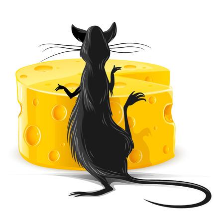 rat noir de manger du fromage jaune isolé sur blanc illustration vectorielle