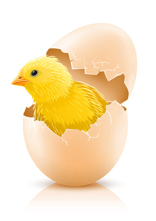 cracked hens egg with chicken baby inside - vector illustration