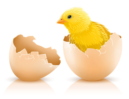 cracked hen's egg with chicken baby inside - vector illustration