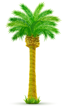 tropical palm tree with green leaves isolated - vector illustration