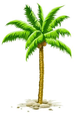 palmboom met kokos vruchten - vector illustration