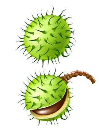 frutos de semillas de castaño aislados en blanco