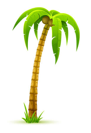 palm tree - vector illustration, isolated on white background