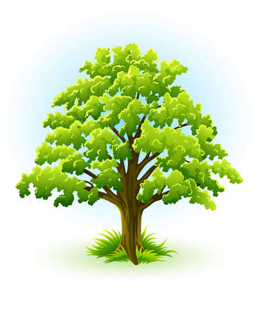 single oak tree with green leafage � vector illustration, isolated on white background Stock Vector - 6516252