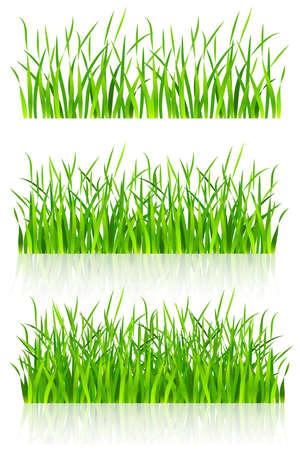 dense: dense green grass vector illustration isolated on white background