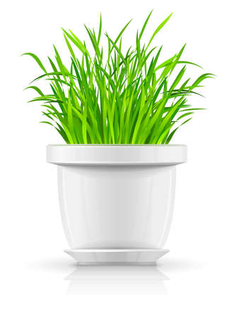 verdure: white flowerpot with green grass illustration isolated on background