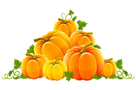 hillock: cosecha de la colina de calabazas maduras naranjas
