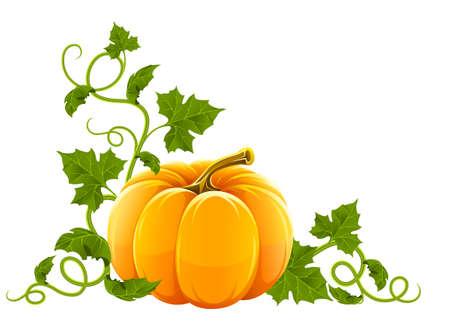 dynia: dojrzałe pomarańczowy warzyw dyni z zielonymi liśćmi Ilustracja