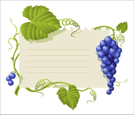 vintage frame with cluster grapes and green leaf illustration isolated on white background Vector