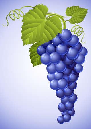 grappe de raisin bleu avec illustration de la feuille verte
