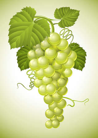 cluster: cluster of grape with green leaves vector illustration