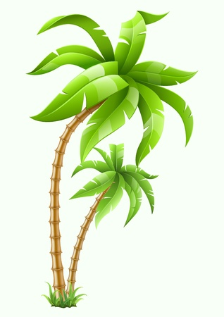 two tropical palms isolated on white background illustration.