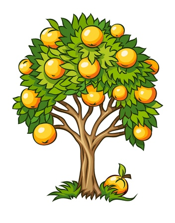 fruit tree illustration isolated on white background Zdjęcie Seryjne - 14646517