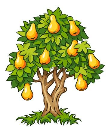 árbol de pera con la ilustración de las frutas maduras sobre fondo blanco