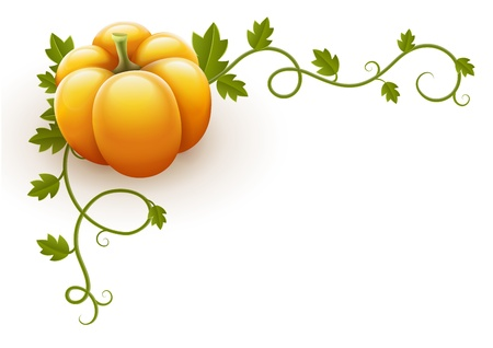 pumpkin vegetable with green leaves vector illustration isolated on white background EPS10. Transparent objects used for shadows and lights drawing. Gradient mesh. Illustration