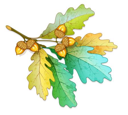 Dąb drzewa z żołędzi i suchych liści. Eps10 ilustracji wektorowych. Pojedynczo na białym tle