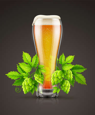 Glass of light lager Beer with white foam and hop plants buds, green leaves.