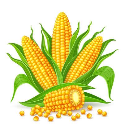 トウモロコシの黄色と緑の葉とトウモロコシの穂軸。