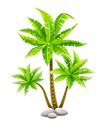 Tropical coconut palm trees, plants with green leaves in stones. Nature detail.