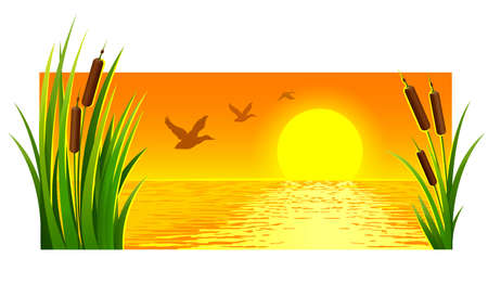 Landscape of sunset at lake with reeds and bright sun on the horizon skyline. Flying wild ducks birds. Horizontal banner, isolated on white background. Vector illustration.