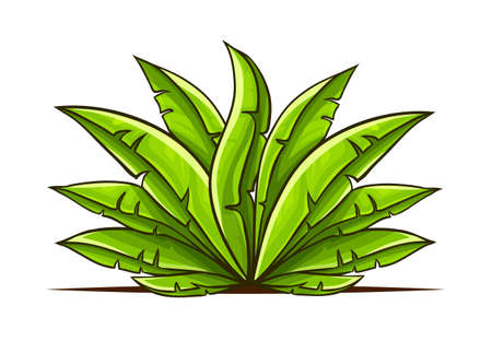Tropical bush with green leaves hand drawn in cartoon style, isolated white background. EPS10 vector illustration