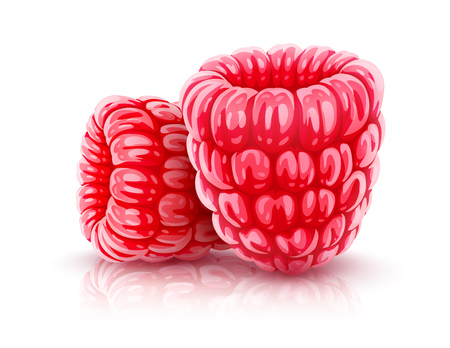 Raspberry berries. Ripe red realistic fruits of raspberries, isolated on white background. EPS10 vector illustration.