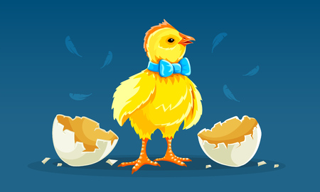 Cartoon hen chicken rooster hatched from egg with shells. Chick ready for Easter holiday with bow at neck. Yellow fluffy domestic poultry bird cock. Eps10 vector illustration.