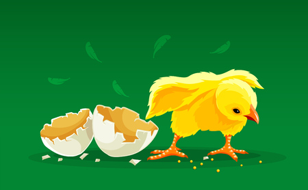 Newborn cartoon hen chicken rooster hatched from egg with shells. Chick ready for Easter holiday with bow at neck. Yellow fluffy domestic poultry bird cock. Eps10 vector illustration.