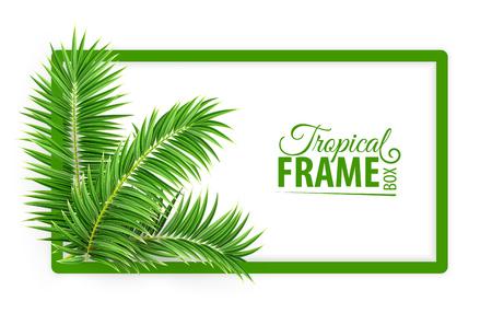 Marco de banner botánico de selva tropical. Disposición de diseño con hojas de palmera verde y lugar para el texto. Realista aislado sobre fondo blanco transparente. Ilustración de vector Eps10.