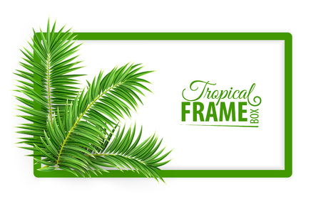 Tropical jungle botanical banner frame. Design layout with green palm tree leaves and place for text. Realistic isolated on white transparent background. Eps10 vector illustration.