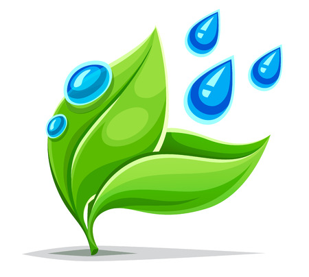 Green leaves plant growing. Healthy life environment concept with blue water drops on leaf. Watering or rain, Isolated on white background.
