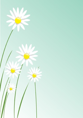 Illustration of realistic looking daisies. Vector
