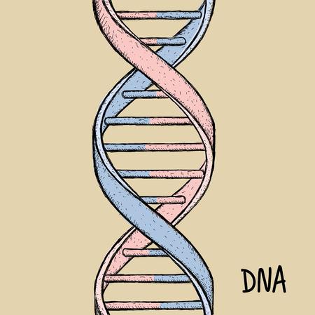 DNA symbol. Hand drawn vector illustration on background