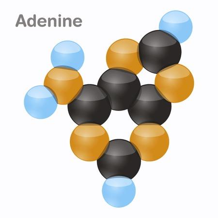 Adenine, A. Pyrimidine nucleobase molecule in 3D vector illustration on white background. Illustration