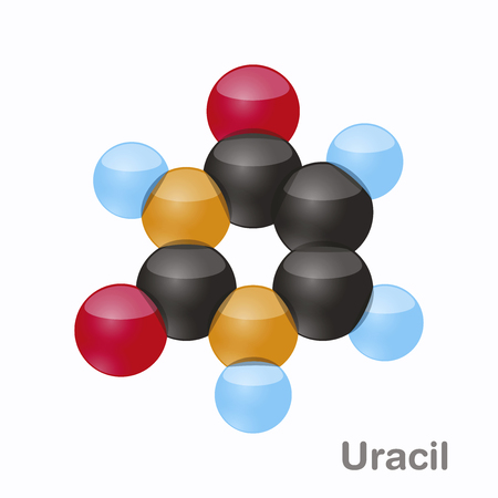 Uracil, pyrimidine nucleobase molecule. Present in DNA, 3D vector illustration on white background.