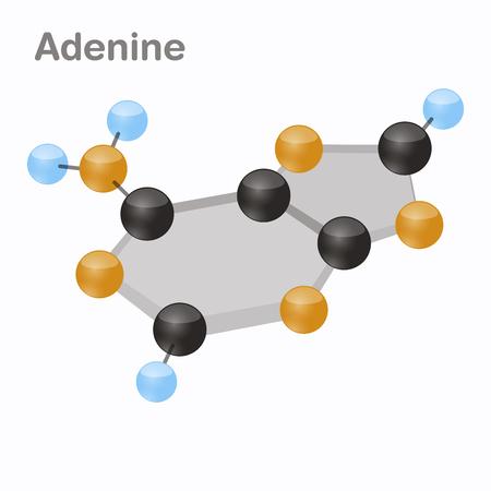 DNA Nucleotides-4, Adenine, A. Pyrimidine nucleobase molecule 3D vector illustration