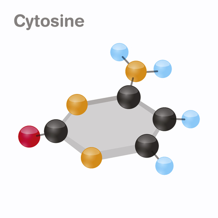 Cytosine HexNut, C. Pyrimidine nucleobase molecule. Present in DNA. 3D vector illustration on white background.