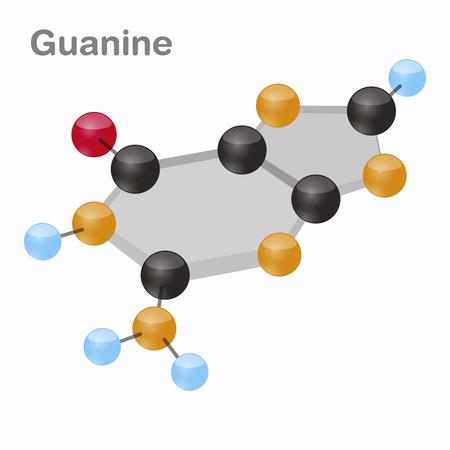Guanine HexNut, G. Purine nucleobase molecule. Present in DNA. 3D vector illustration on white background. 일러스트