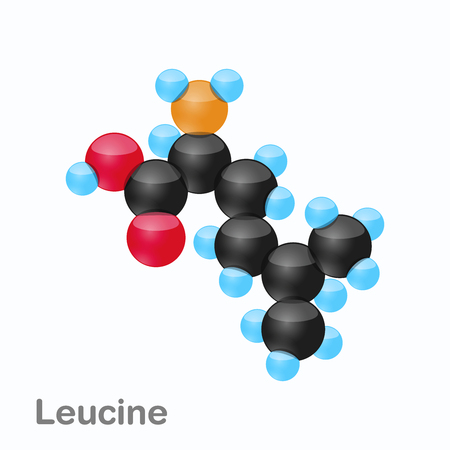 Molecule of Leucine, Leu, an amino acid used in the biosynthesis of proteins