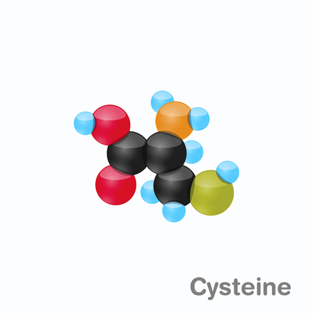 Molecule of Cysteine, Cys, an amino acid used in the biosynthesis of proteins, Vector illustration Illustration