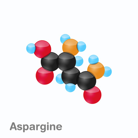 Molecule of Asparagine, Asn, an amino acid used in the biosynthesis of proteins