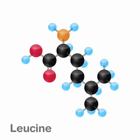 Molecular omposition and structure of Leucine, Leu, best for books and education
