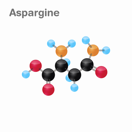 Molecular omposition and structure of Asparagine, Asn, best for books and education Ilustração