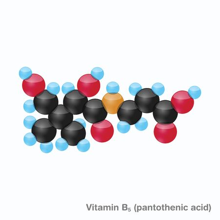 The molecule of vitamin B5 (pantothenic acid). Vector illustration in 3d style, isolated on white background. Иллюстрация