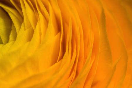 Macro shot of a yellow flower. Closeup of a yellow tulip. Imagens