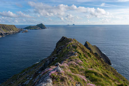 View from a cliff in Ireland with pink flowers in the foreground. View on the Skellig Islands. View from a cliff at the Ring of Kerry. Reklamní fotografie